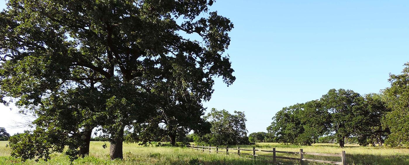 King Oaks Blog