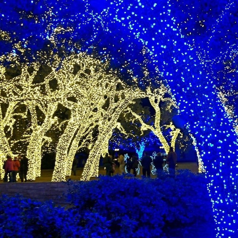 Christmas Lights In College Station