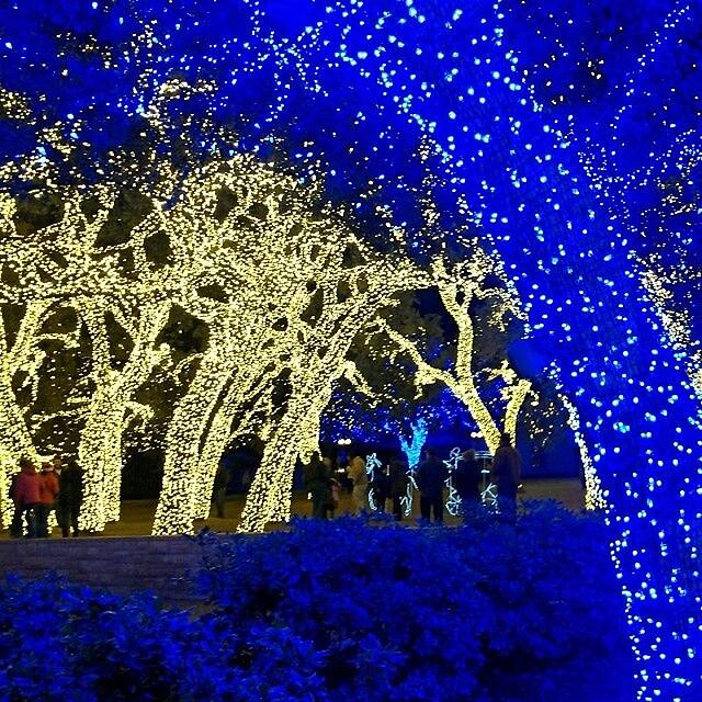 Christmas Tree Disposal San Diego: Best Places To See Christmas Lights In The Brazos Valley