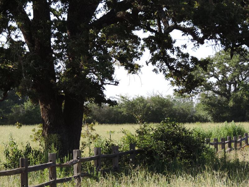 King Oaks Newly Released Homesites